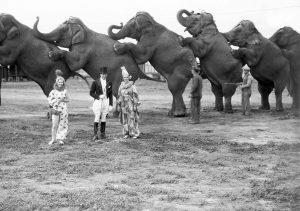 Elephant Sideshow
